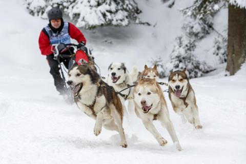 Hundeschlittenrennen 2018