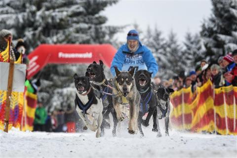 Hundeschlittenrennen Start