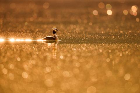 Bathed in bokeh