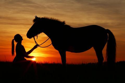 Pferdeliebe01