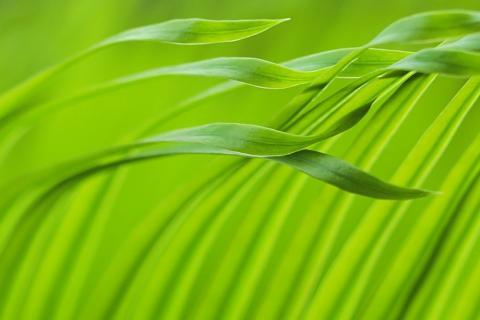 Die Farbe Grün .....