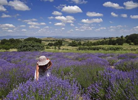Lavendel in der Toskana