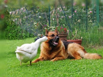 Dog und Lola