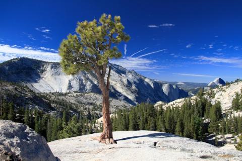 Tioga Pass Yosemite-Nationalpark