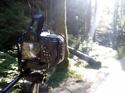 Waldlandschaft im Gegenlicht - ein Making-of