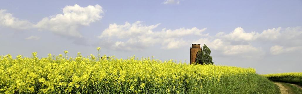 Rapsfeld und Wasserturm