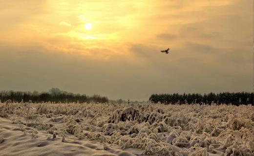 52 Fotografieren_sie_ein_Winterbild_Michael Milfeit