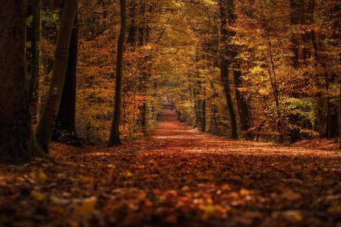Waldweg im Herbst II