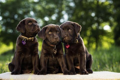 Molly,Milly und Peanut