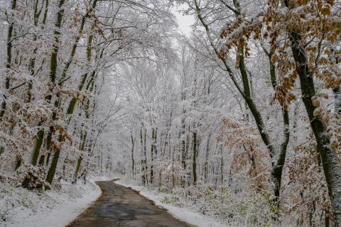 52_fotografieren-sie-ein-Winterbild_renate_stigler