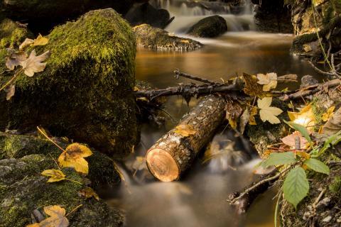 10_baumstarke-fotos_renate_stigler.jpg