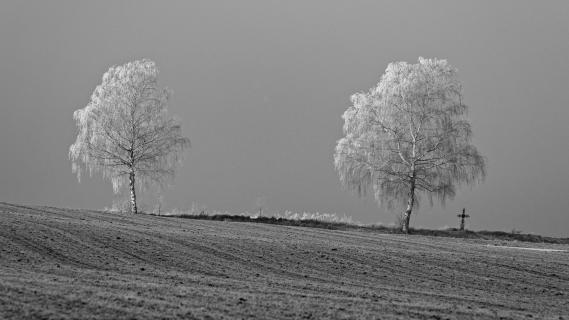 Bäume mit Raureif