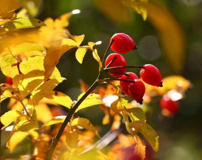 Herbstmotiv