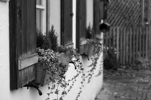 Nicht bunte Blumen