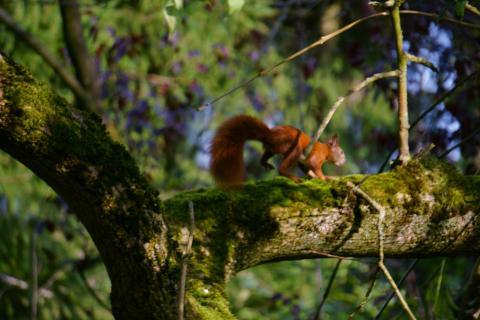 Eichhörnchen - schnell davon