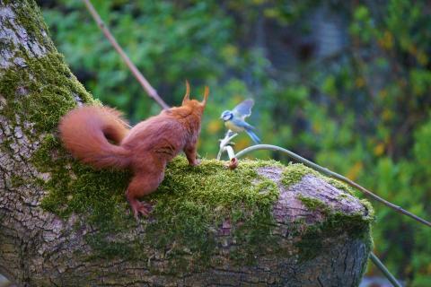 Eichhörnchen trifft auf Vogel