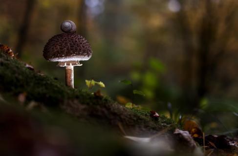 Tief im dunklen Wald
