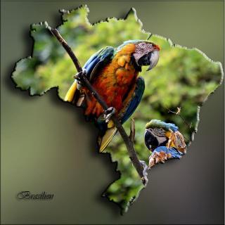 Brazil-Animal