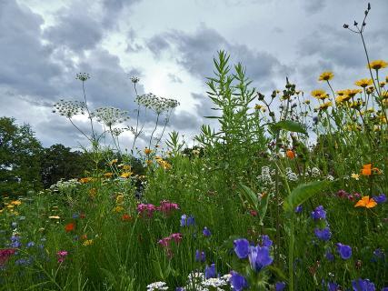 Wildblumenfeld
