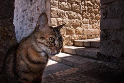In Dubrovnik's Gassen