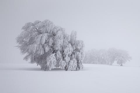 Im Nebel 1