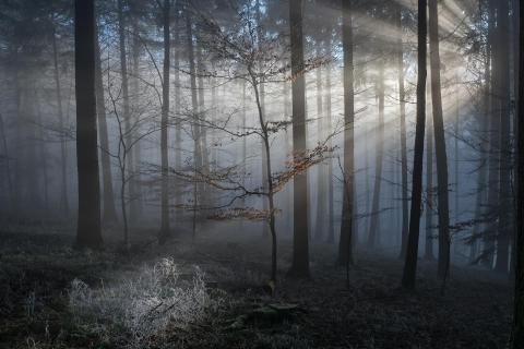 39 Herbst_im_Nebel_Norbert_Weiss