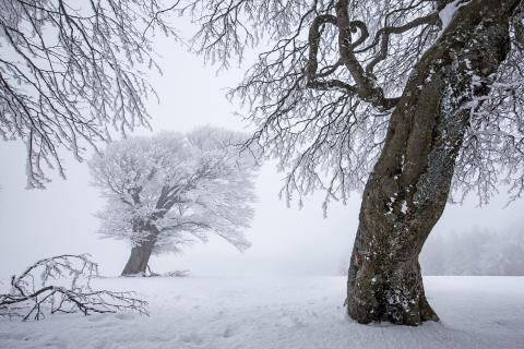 52 Winterbild_Norbert_Weiss