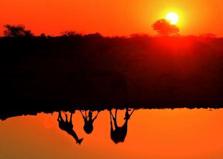 Giraffentreff am Wasserloch