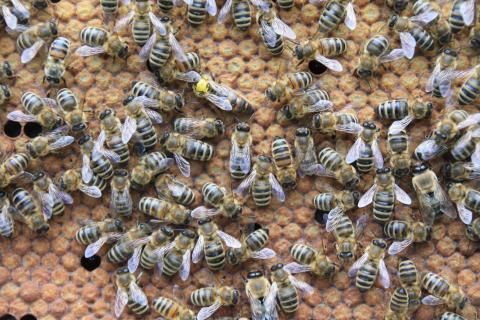 Struktur im Bienenstock