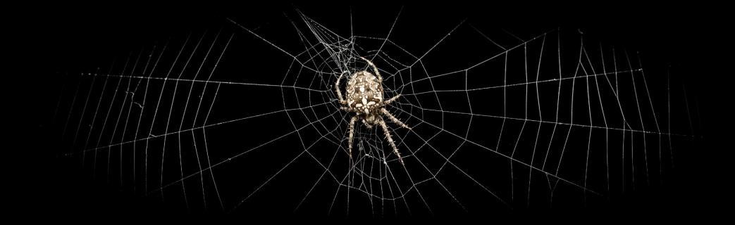 Spinne im dunklen