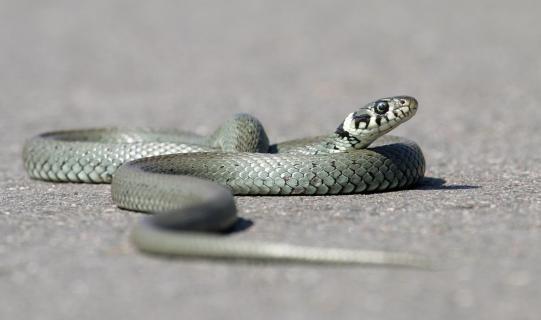 Asphalt-Schlange