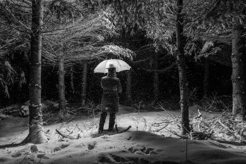 Bei Schneefall nachts im Wald