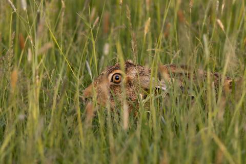 Ich sehe Dich