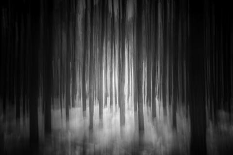 mystic woodland