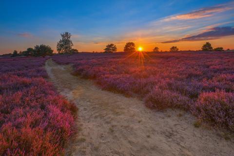 Sonnenuntergang in der Nemitzer Heide
