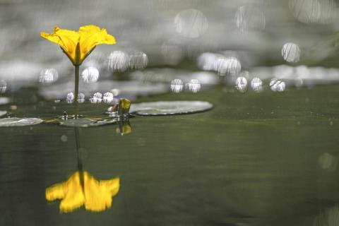 02_Spiegelung im Wasser_Roland_Klein