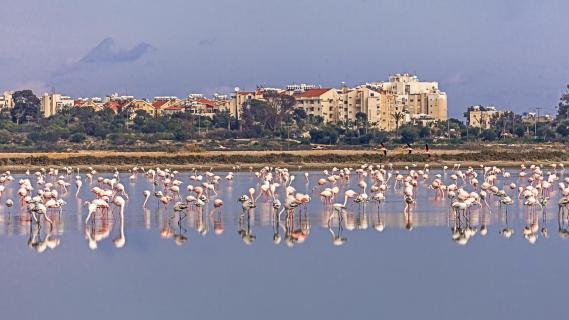 Salzsee Larnaca
