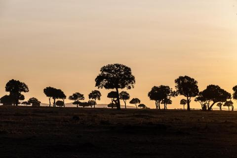 Masai Mara Sonnenaufgang