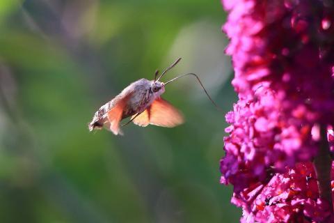 Insekten-Garten