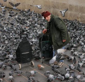 Der sich um die Tauben kümmert
