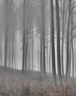 39 Herbst_im_Nebel_Klaus_Waescher