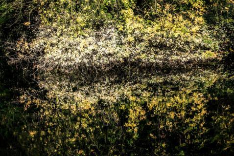 Blätterspiegel