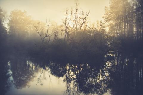 39 Herbst im Nebel_Martin_Gebhardt