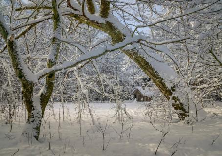 52 Winterbild_Martin_Gebhardt