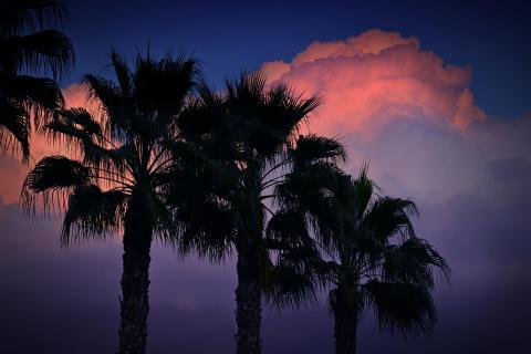 unter Palmen