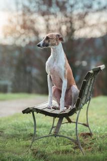 Sitzend auf der Bank