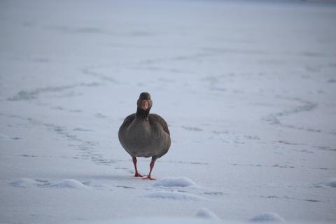 52 Fotographieren_Sie_ein_Winterbild_Anja_Wurtz