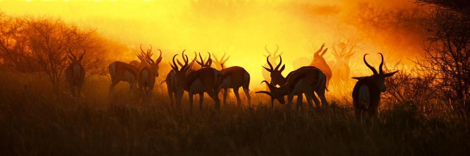 Springbok Sunset