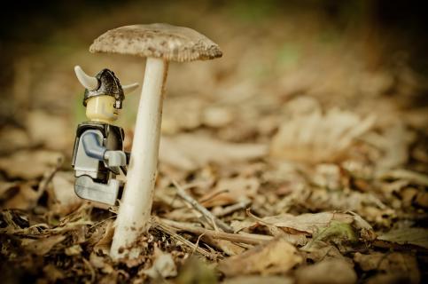 Bergsteiger im Wald