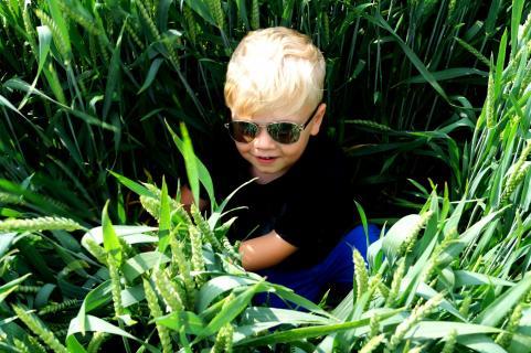Ein Kind im Kornfeld